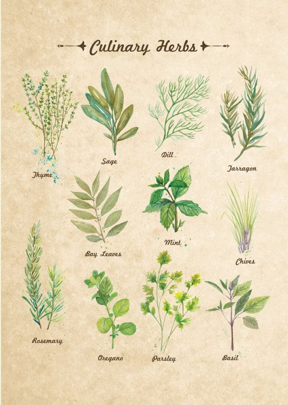 11x14 In Culinary Herbs Vintage Wall Decor Art Print Watercol