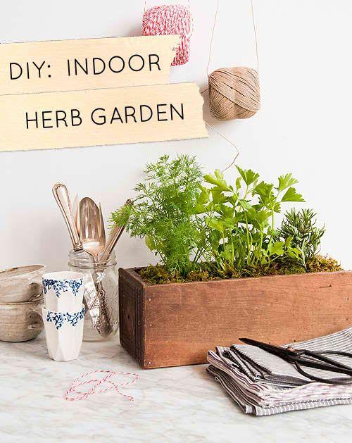 Diy Indoor Herb Garden Gardening Stuff Pinterest