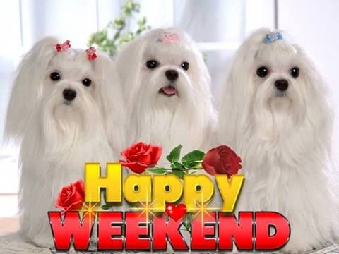 Image result for Happy Weekend All