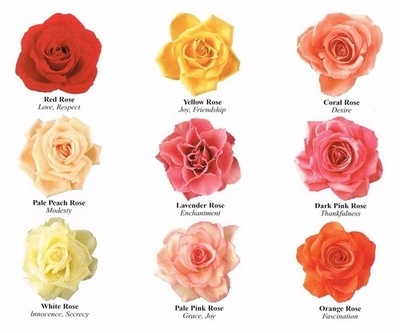 Rose colours and their meanings pretty pinterest for What colors make rose