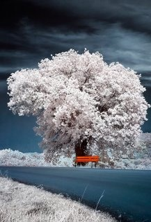 Snow in the tree makes for a beautiful image..