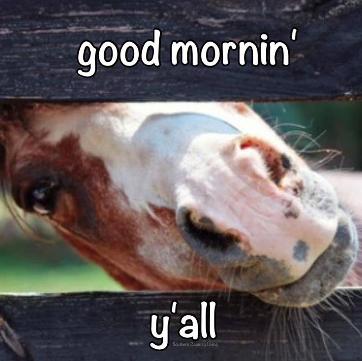 Good Morning Y All : Good mornin y all texanisms pinterest