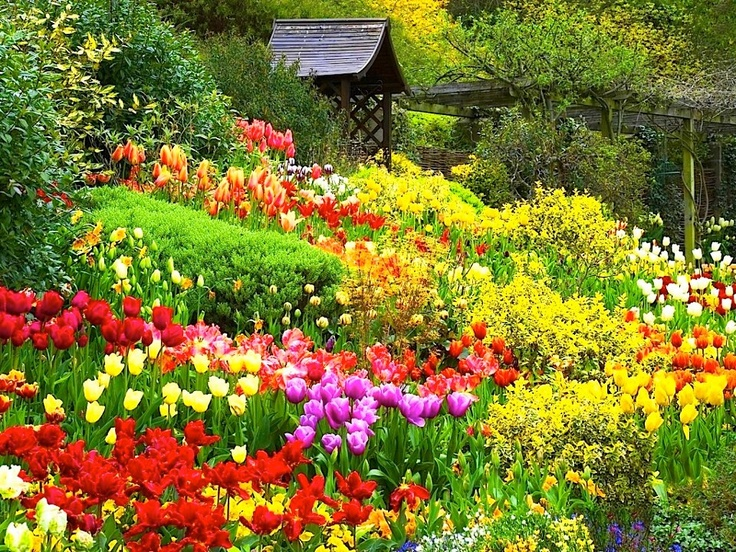 Beautiful tulips garden Gardens Pinterest