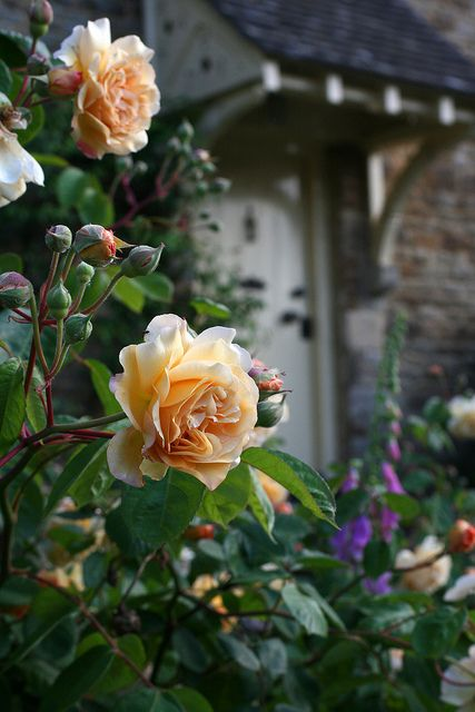 incorporate existing roses. Color echoes that of the grapefruit and orange trees