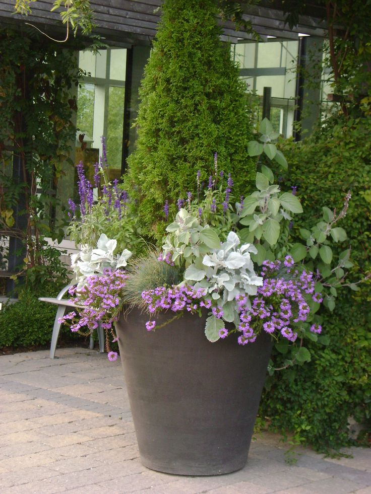Purples and silvers in large container gardening pinterest - Large container gardening ...