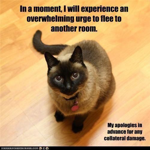 cats behavior wallpaper