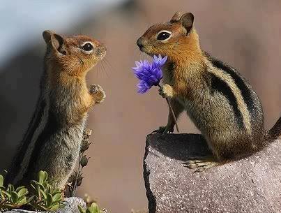 (182) Nature Photobook