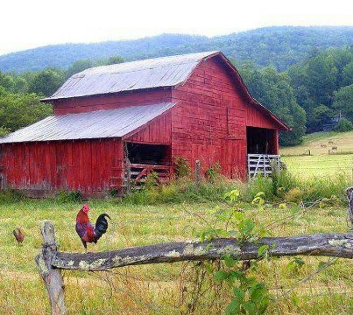 Old Red Barn And Rooster