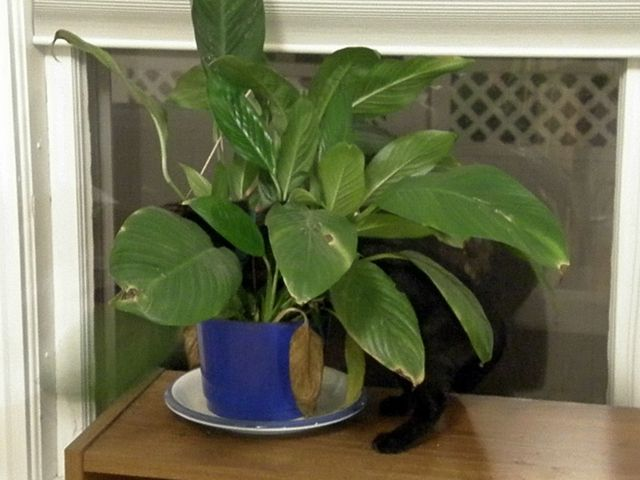Pinterest discover and save creative ideas Houseplants not toxic to cats