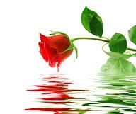 ... Special at Reine de la Rose Eco.Spa. Valid until 31 March 2013