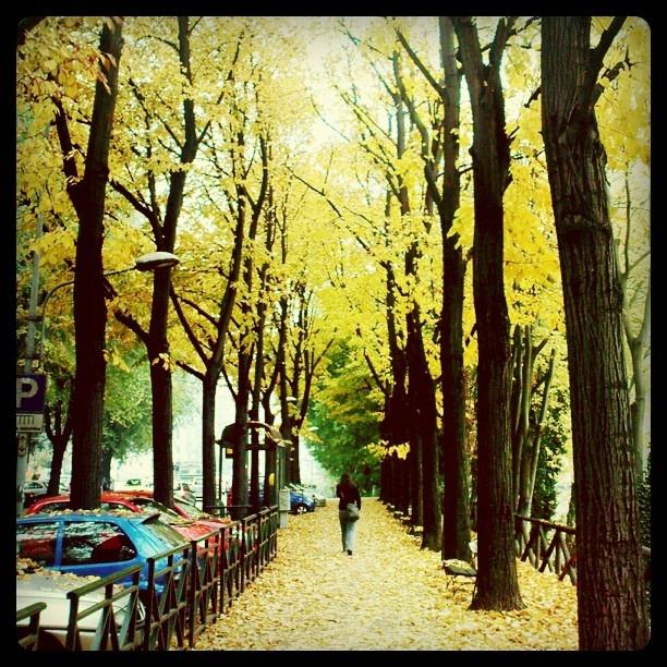 #instagram #Archive #Autumn #Autunno #Sonbahar #payiz #yaprak#December #Dora #Torino #Italia #photooftheday #Turin #Italy #2011 - @hatef- #webstagram