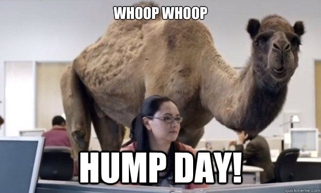 Hump Day Camel T-Shirt | Funny | Pinterest