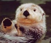 The otter is the common name
