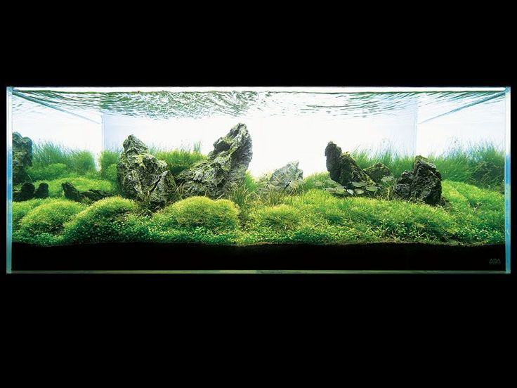 Nature Aquarium - Takashi Amano GREEN Pinterest