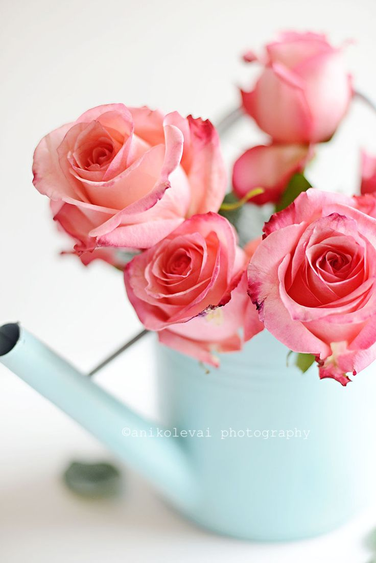 Roses - gorgeous photos!
