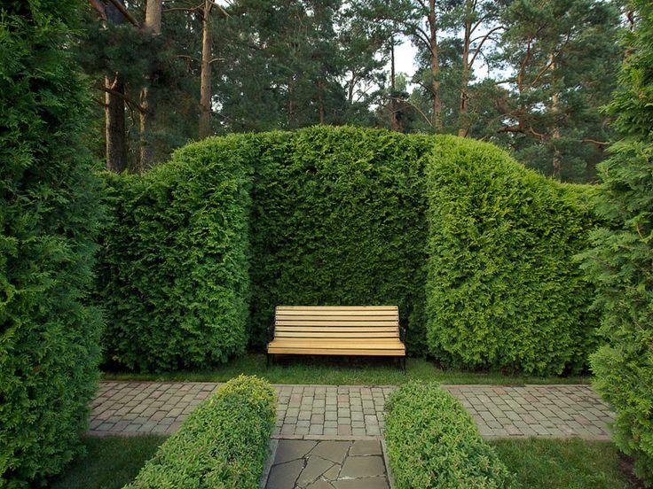 thuja 39 smaragd 39 hedges topiary pinterest. Black Bedroom Furniture Sets. Home Design Ideas