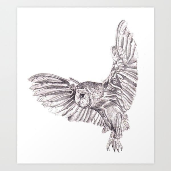 Flying owl pencil drawings - photo#2
