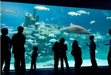 Fort Fisher Aquarium