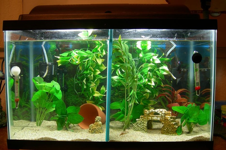 fish tank keeping clean clean an aquarium everything you