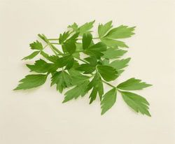 Lovage Part 2 recipes | Mermaids Treasures Blog stuff | Pinterest