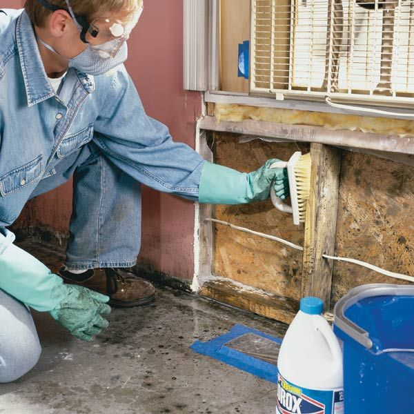 how to remove mold a major mold infestation can ruin your home and