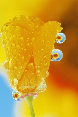 Beautiful dew drops on a lovely flower