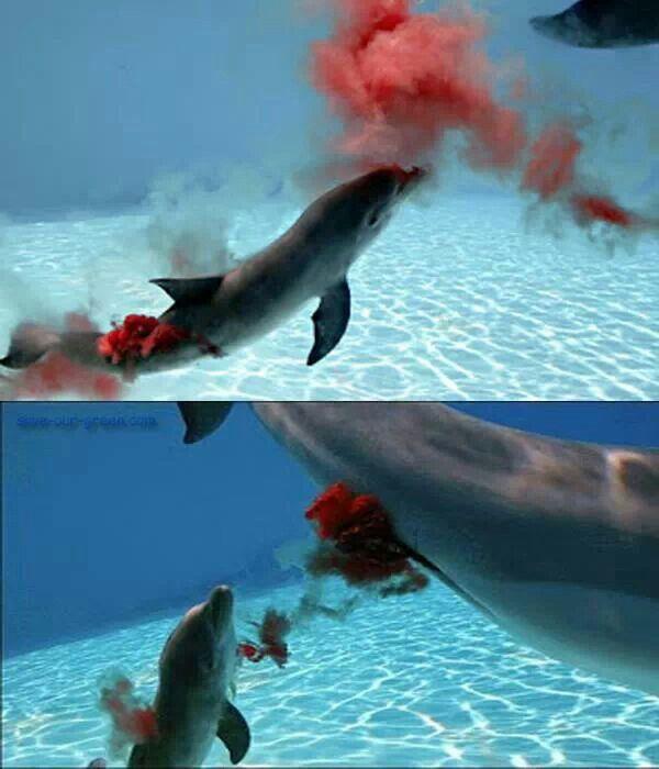 New born dolphin amazing sea pinterest