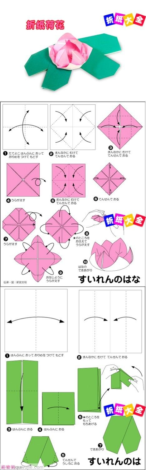 origami water lily fun water lilies pinterest