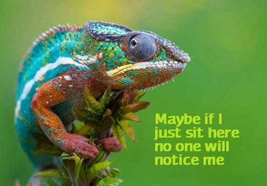 chameleon things i find funny pinterest