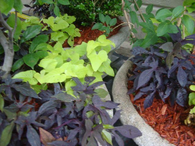 Container Gardening..! | .• DCD® Works | Pinterest