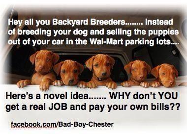 backyard breeders dog stuff pinterest