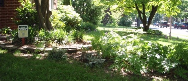 create a backyard wildlife habitat gardening pinterest