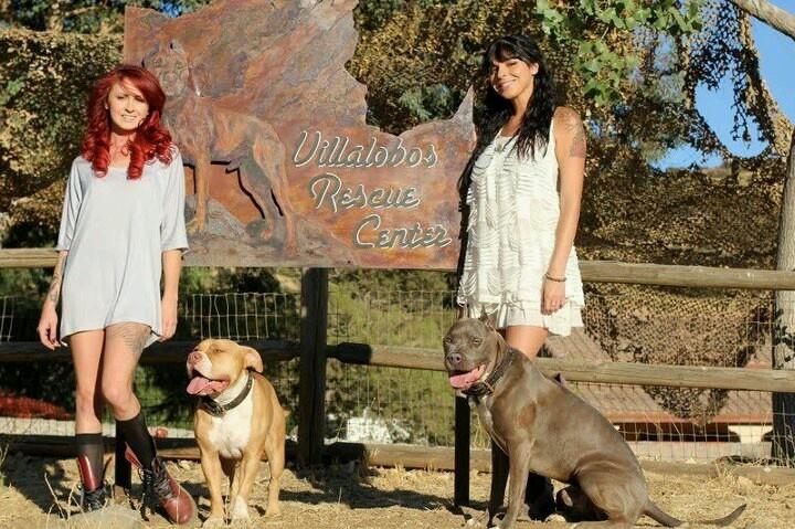 Villalobos Pit Bull Rescue | Adopt A Pit Bull | Pinterest