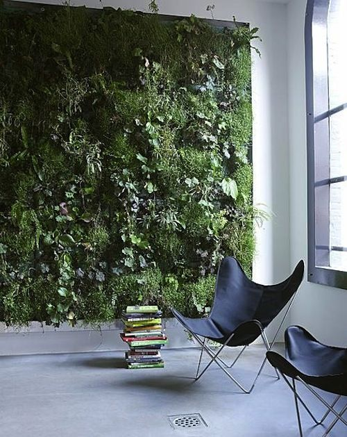 Green wall of plants