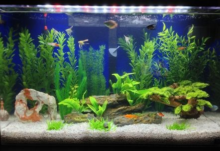 Seaclear 29 gallon fresh water tank For the Home Pinterest