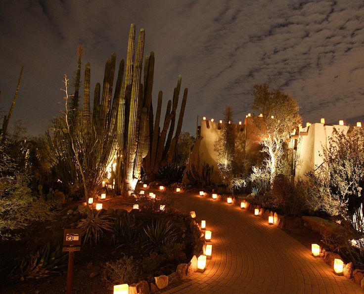 Luminarias At Desert Botanical Gardens To See In Az Pinterest