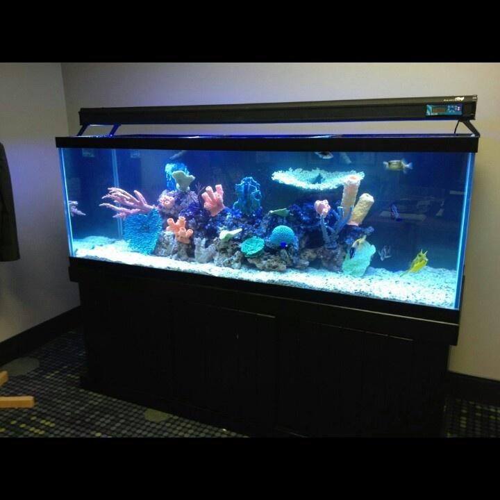 fish aquarium 200 gallon - 200 gallon fish only system Transforming ...