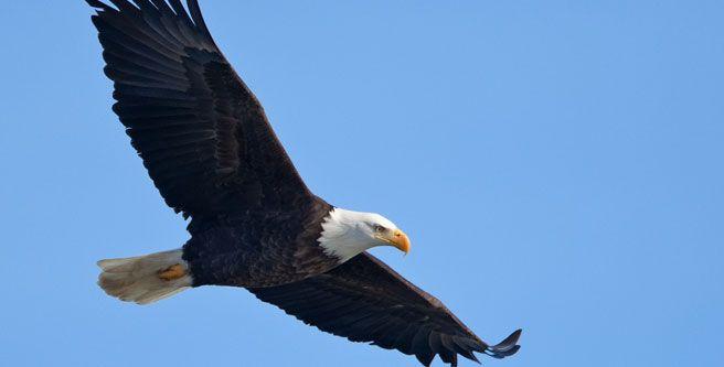 Bald Eagle Cam | GimiGoodNews | Pinterest