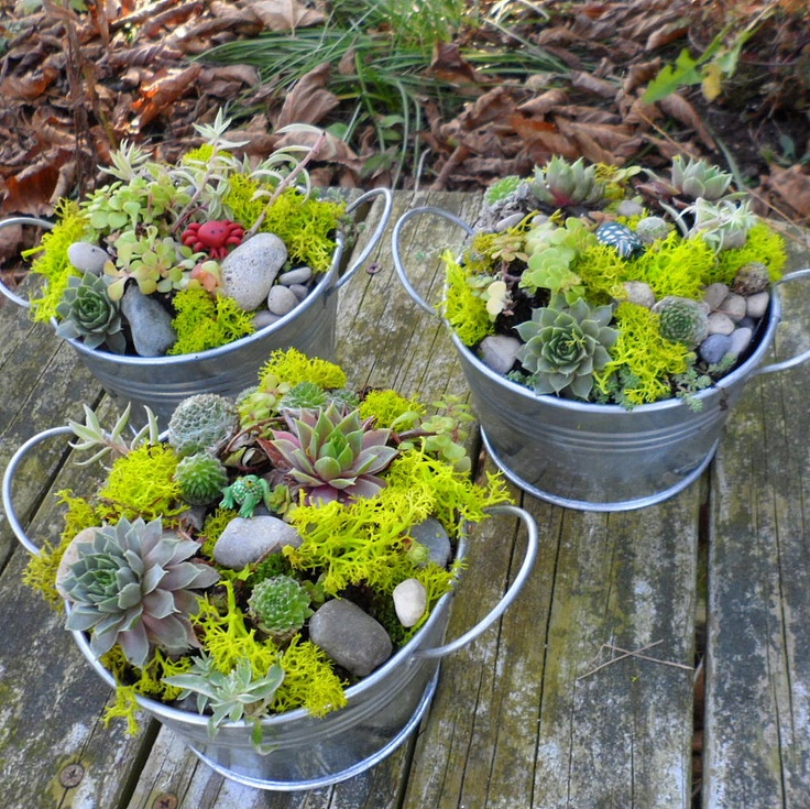 Pin By Pat On Dish Gardens Pinterest
