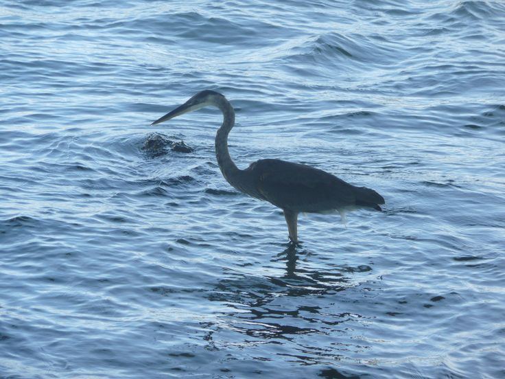 Merritt Island National Wildlife Refuge