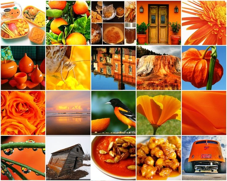 orange design collage | My TRANSITIONAL Style | Pinterest