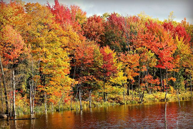 Autumn in Upstate New York by TinyAcorn, via Flickr