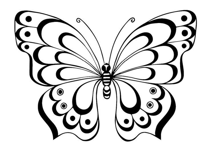 Бабочки раскраска фото