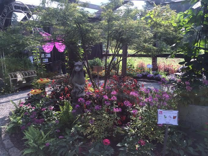 pin by creekside gardens tunkhannock pa on butterfly house pinter