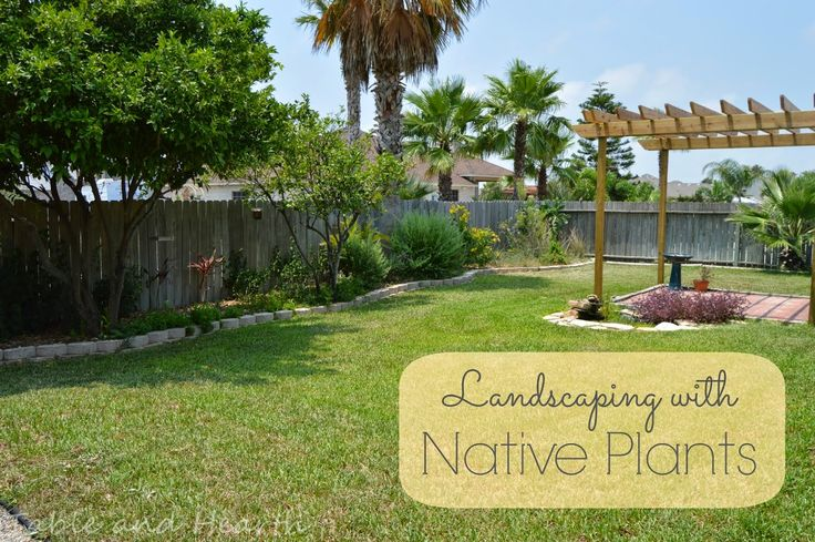 Landscaping With Native Plants : Landscaping with native plants plantin