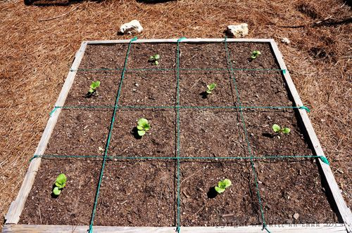 Square foot garden designs the grid gardening pinterest for Square foot garden designs