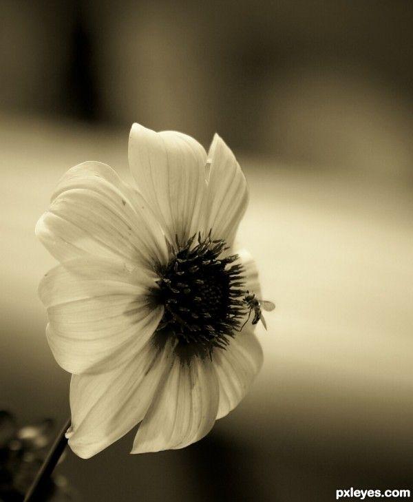 sepia photography(: