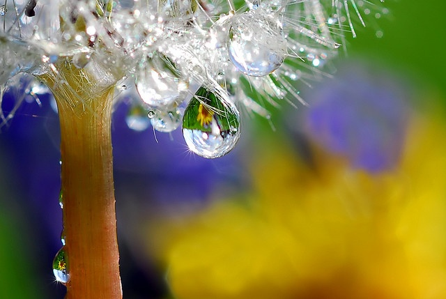 dandy drop  by Steve Wall
