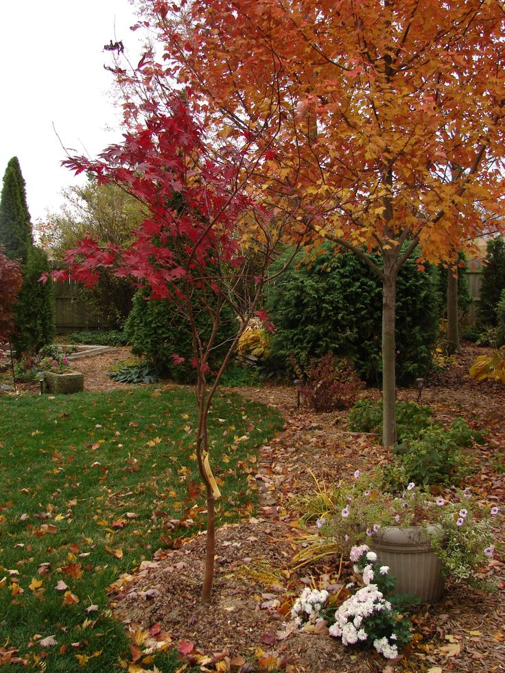 Fall in the garden gardening pinterest - Gardening in fall ...
