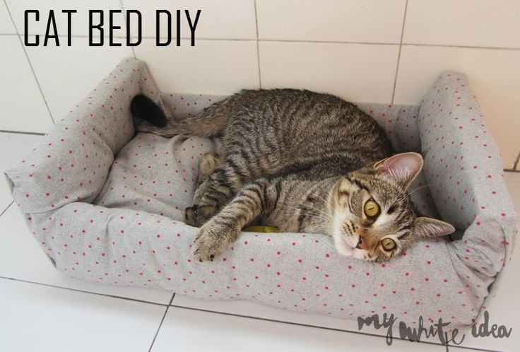Cat bed diy diy for your pet pinterest for Homemade cat bed
